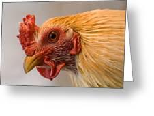 A Chicken In Burwell, Nebraska Greeting Card