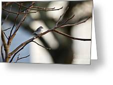 A Chipping Sparrow Greeting Card