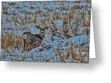 A Christmas Day Young Buck Greeting Card