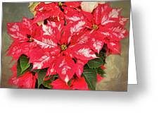 A Christmas Flower Greeting Card