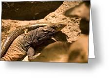 A Chuckwalla Lizard And A Skink Greeting Card