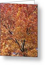A Claret Ash Tree In Its Autumn Colors Greeting Card