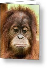 A Close Portrait Of A Sad Young Orangutan Greeting Card