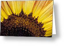 A Close-up Detail Of A Sunflower Head Greeting Card
