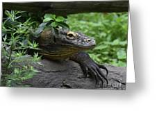 A Close Up Look At A Komodo Dragon Lizard Greeting Card