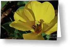 A Close Up Look At A Yellow Flowering Tulip Blossom Greeting Card