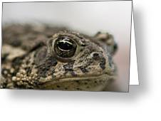 A Close-up Of A Toad Found In Dunbar Greeting Card