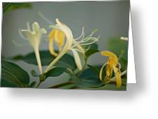 A Close Up Of Honeysuckle Greeting Card