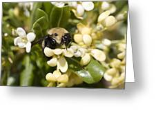 A Close View Of A Bumblebee Pollinating Greeting Card
