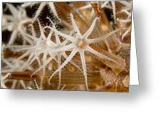 A Closeup View Of Coral Polyps Greeting Card