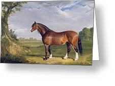 A Clydesdale Stallion Greeting Card by John Frederick Herring Snr