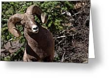 Cockeyed Ram Greeting Card