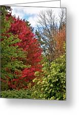 A Collection Of Fall Colours Greeting Card