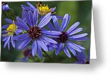 A Color Purple Greeting Card