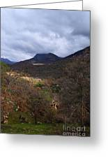 A Colorful Scene Of Burned And Lush Interspersed Foliage In The Southwest Foothills Of The Sierra Ne Greeting Card