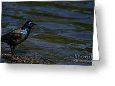 A Common Grackle Greeting Card