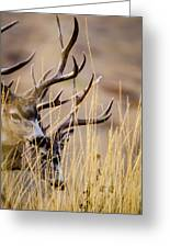 A Couple Of Bucks Greeting Card