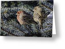A Couple Of House Finch Greeting Card by LeeAnn McLaneGoetz McLaneGoetzStudioLLCcom
