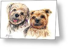 A Couple Of Yorkies Greeting Card