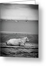 A Cow On The Beach Greeting Card