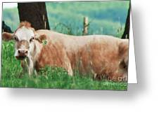 A Cow's Tale - Lazy Day Greeting Card