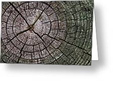 A Cut Above - Patterns Of A Tree Trunk Sliced Across Greeting Card