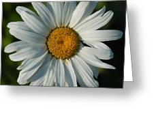A Daisy A Day Greeting Card