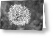 A Dandelion Black And White Greeting Card