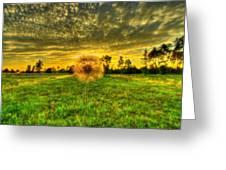 A Dandy Sunset Greeting Card