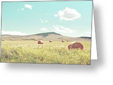 A Day In The Fields Greeting Card