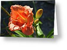 A Day In The Spotlight Greeting Card