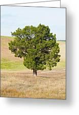 A December Cedar Greeting Card