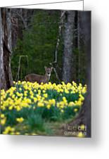 A Deer And Daffodils 4 Greeting Card