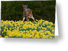 A Deer And Daffodils IIi Greeting Card