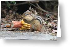A Delicious Treat - Chipmunk Eating Corn Greeting Card