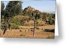 A Biblical Landscape Greeting Card
