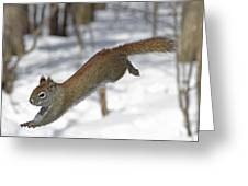 A Devil Named American Red Squirrel Greeting Card