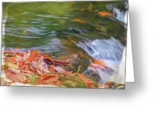 Flowing Water Fall Leaves Closeup Greeting Card