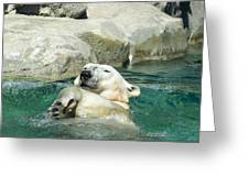 A Dip In The Pool Greeting Card