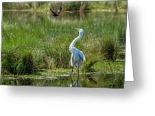 A Disagreement At The Pond Greeting Card