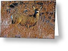 A Doe   A Deer Greeting Card
