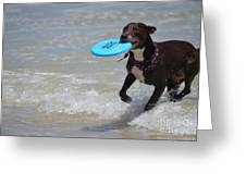 A Dog And Her Frisbee Greeting Card