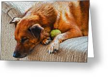 A Dog And His Tennis Ball Greeting Card