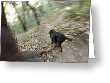 A Dog Backpacking On Pine Ridge Trail Greeting Card