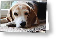 A Dog Thinking Greeting Card