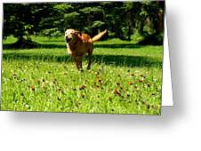 A Dogs Freedom Greeting Card