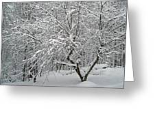 A Dogwood Sleeps While The Snow Falls Greeting Card