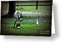 A Donkey And His Bird Greeting Card