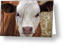 A Face You Can Love - Cow Art #609 Greeting Card