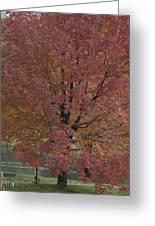 A Fall Day At Como Greeting Card